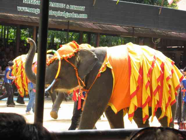 шоу слонов