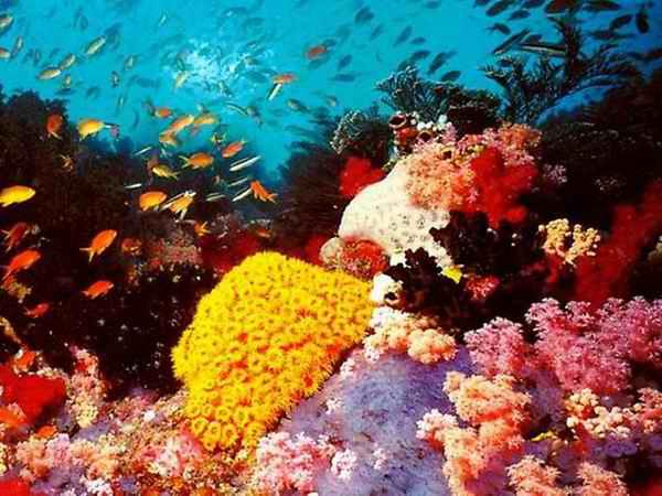 Большой Барьерный риф Австралии