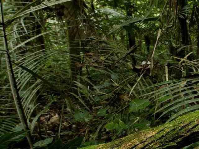 Мексика Ривьера Майя