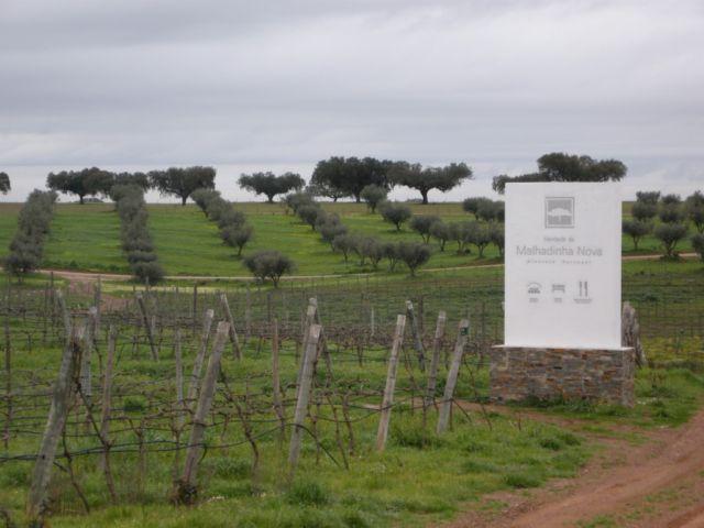 вина Португалии