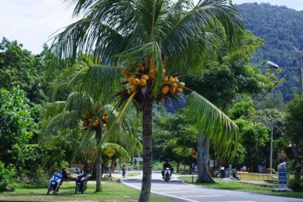 Пангкор