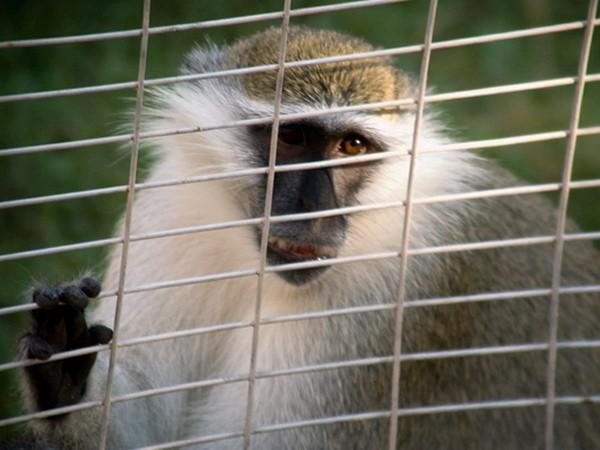 Зоопарк в Аль-Айне, Al-Ain Zoo