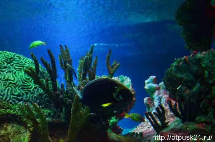 один из обитателей зоны кораллового рифа