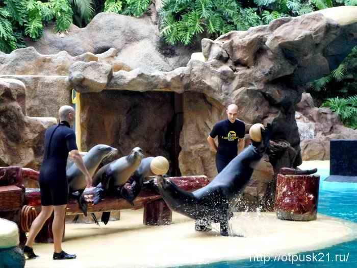 шоу морских котиков в Лоро Парке