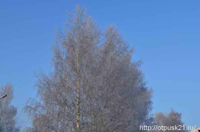морозный зимний день